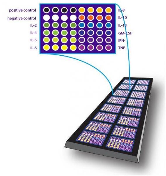 蛋白芯片检测技术服务