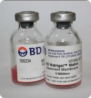 354234 BD Matrigel基质胶/基底膜,细胞迁移首选!
