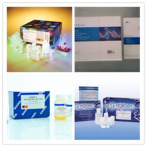 大鼠12脂加氧酶(12-LO)ELISA试剂盒
