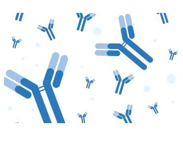 Anti-Mycobacterium tuberculosis ESAT-6