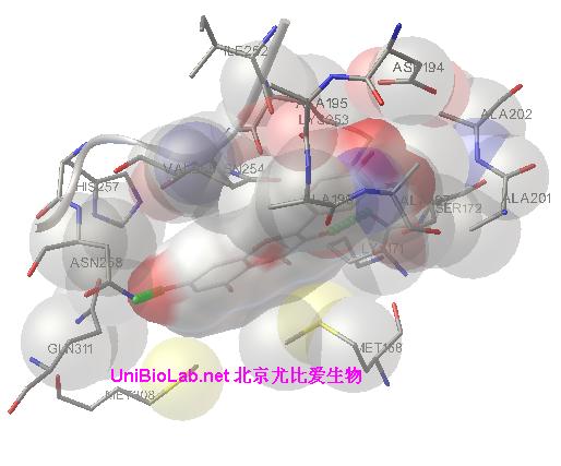 蛋白结构预测服务-配体停泊docking