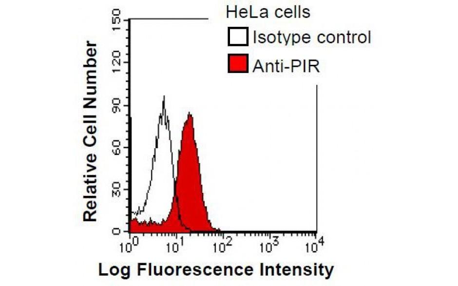 Fitzgerald/PIR antibody/10R-1386/50 ug