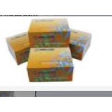 Biomatik/Alpha-Tocopherol (TCPa) CLIA Kit/EKU08650/96T