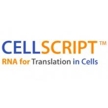Cellscript/T7-Scribe™ Standard RNA IVT Kit/ C-AS3107/50 reactions
