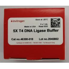 T4 DNA Ligase Buffer