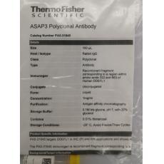 ASAP3 Polyclonal Antibody