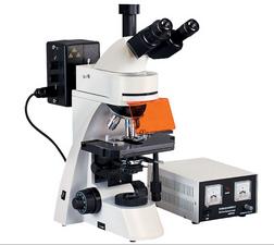落射荧光显微镜|四波长荧光显微镜|荧光显微镜BM2000Z-启步供应021-51698819
