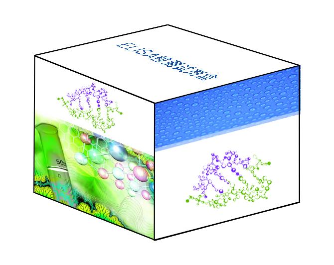 猪口蹄疫病毒亚洲型核酸荧光PCR检测试剂盒