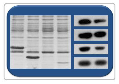 基因芯片服务
