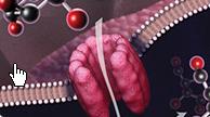 肠炎沙门氏菌脂多糖  L7770-1MG