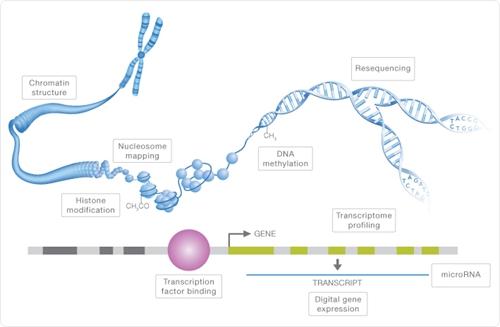 表观遗传学数据分析