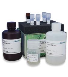 SDS-PAGE凝胶快速制备试剂盒