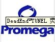 Promega,A7701,Wizard®Midipreps DNA Purification Resin/A7701,质粒提取与纯化