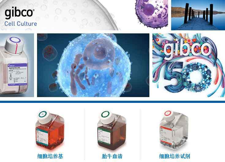 DMEM,11885084,GIBCO培养基