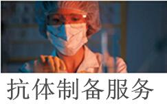 抗体制备、抗体定制;国际先进技术,向全国客户提供服务!
