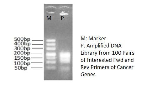 高保真二代测序DNA文库制备PCR反应液 2X HiFi PCR Master Mix For DNA library preparation
