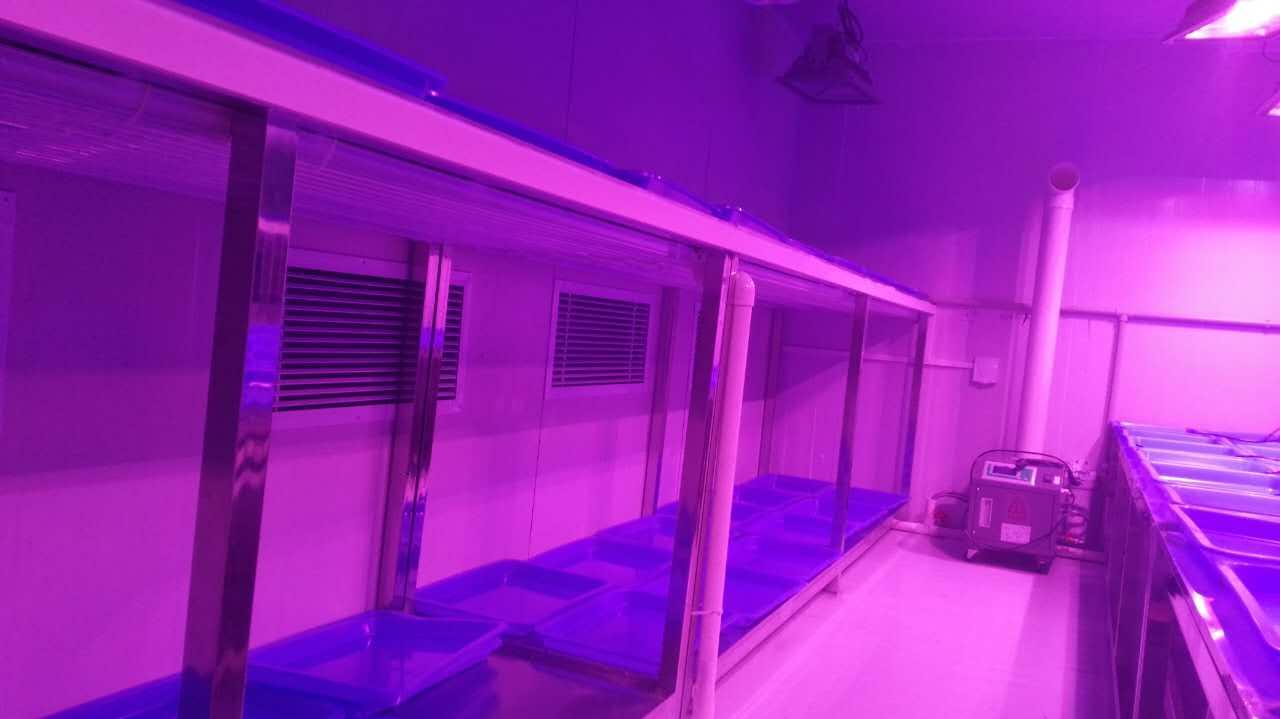 承接智能人工气候室项目 培养架人工气候室建设