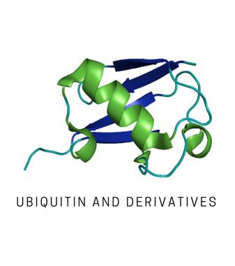 Life Sensors/SI2702-5µg (panel) K27-linked (Ub2) di-ubiquitin/SI-0200-2702