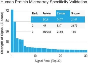 NSJ/Bcl6 Antibody [clone BCL6/1475] (V3495)/V3495SAF-100UG/ 100 ug