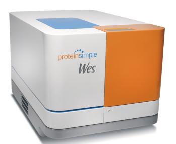 全自动蛋白质印迹定量分析系统