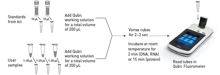 Qubit定量检测流程