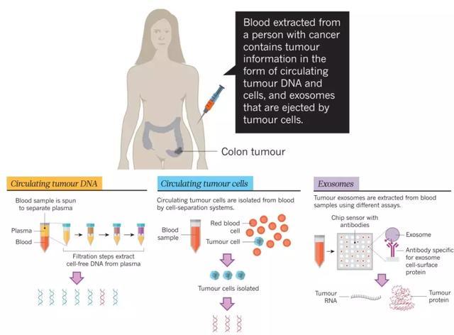 肿瘤研究领域ctDNA应用盘点