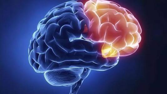 多梳蛋白EED在大脑发育中起着复杂的作用