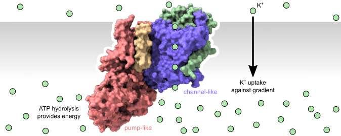 关于离子传输的中心生物学教条的新见解