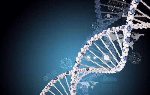 研究显示动态DNA有助于抵御基因损伤