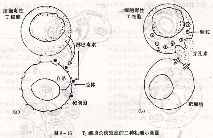 免疫印迹及免疫沉淀用(WB/IP)裂解液