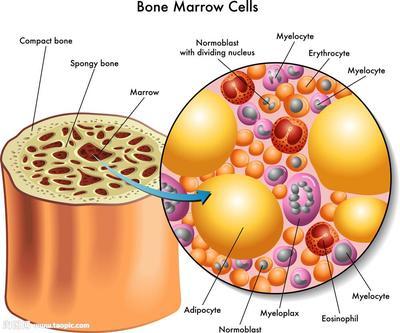 人肺动脉内皮细胞裂解液