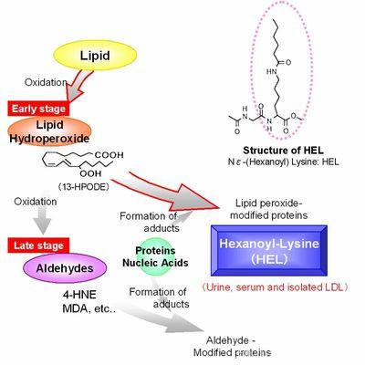 小鼠IL-15酶联免疫检测试剂盒