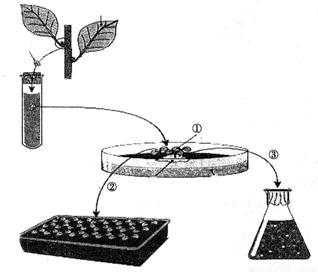 6孔 TW膜板,面积4.67cm2,孔径0.4/3.0/8.0μm