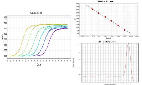 RT-PCR实验检测