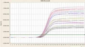 荧光定量PCR技术