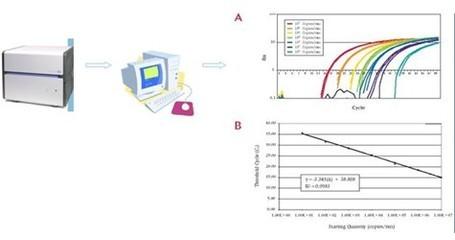 荧光定量PCR检测服务