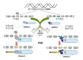 miRNA技术服务