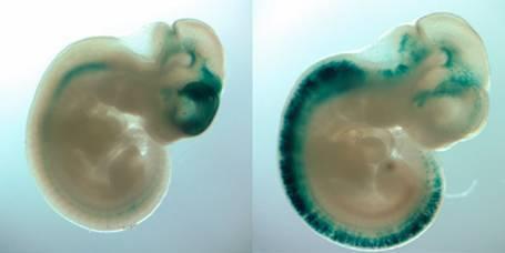 鸭瘟病毒的PCR鉴定
