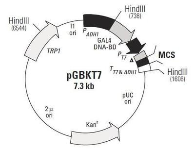 基因克隆服务(PCR产物克隆,表达载体克隆,慢病毒载体克隆)