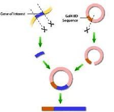 MicroRNA mimics 库和MicroRNA inhibitors库