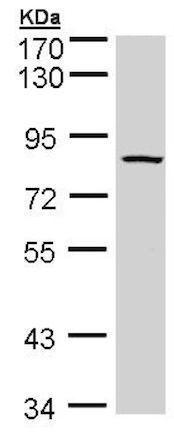 内质网红色荧光探针(活细胞)