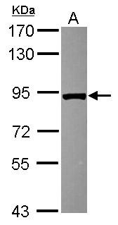 NoLimits  25 bp DNA Fragment