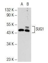 O'GeneRuler  Low Range DNA Ladder, ready-to-use