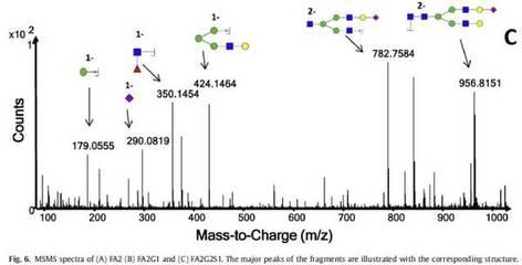 重组心型脂肪酸结合蛋白/脂肪酸结合蛋白3