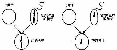 5-核黄素磷酸钠盐二水 (核黄素-5-磷酸钠盐二水物)
