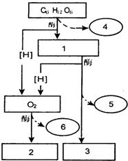 bio-World 溶果胶酶 Pectolyase Y-23(41600202-1)