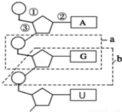 Cytosine 胞嘧啶  4-氨基-2-羟基嘧啶