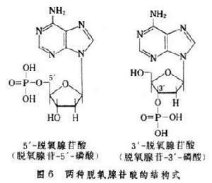 Guanine鸟嘌呤