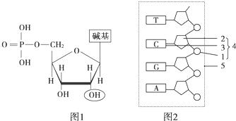 胞苷 5-磷酸二钠盐,CMP