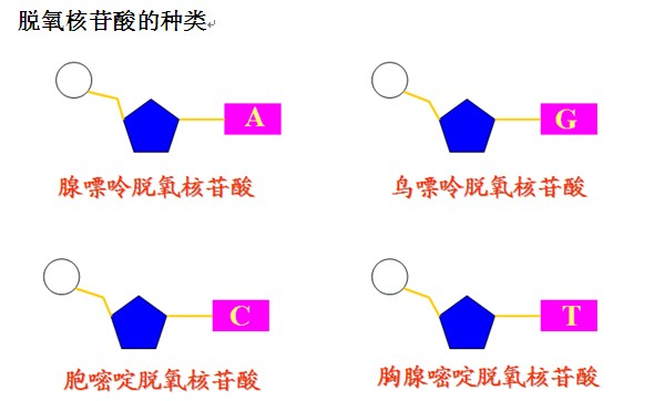 磺胺对甲氧嘧啶(SMD)单克隆抗体